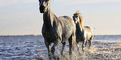 glucosamine paard